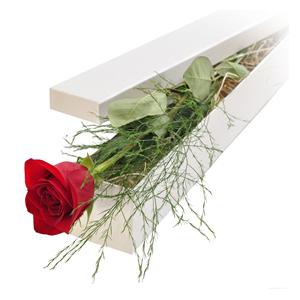 1-fir-de-trandafir-rosu-in-cutie-cku9Y