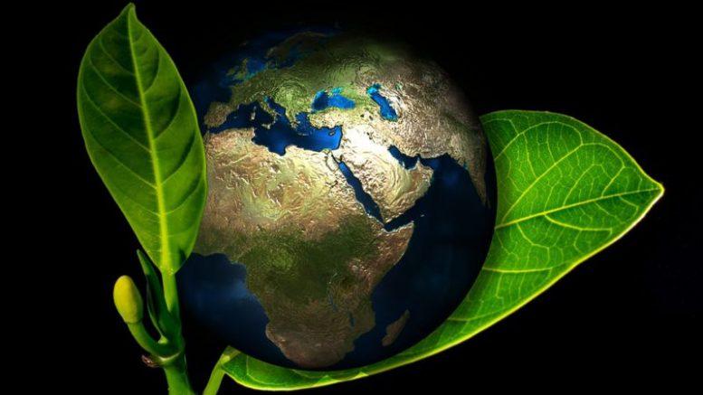 produse de curățenie ecologice