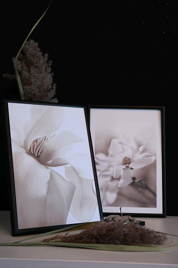 afise magnolii