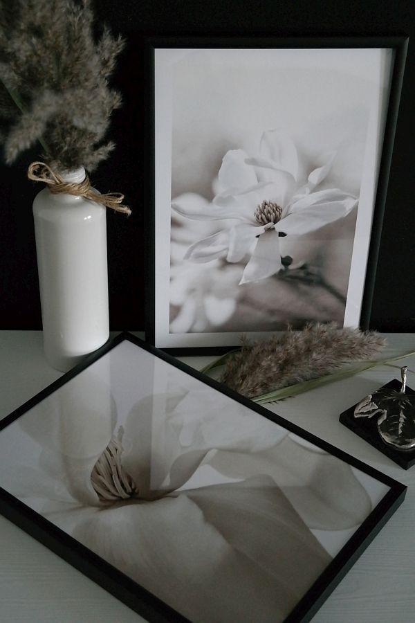 poster magnolii